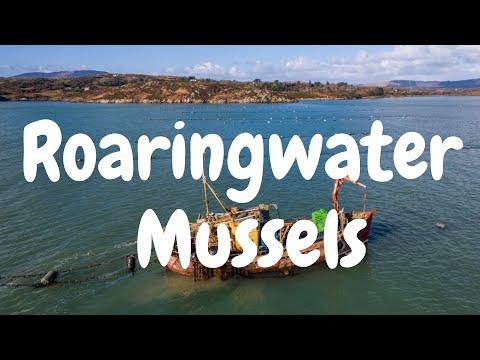 Roaringwater Bay Mussels