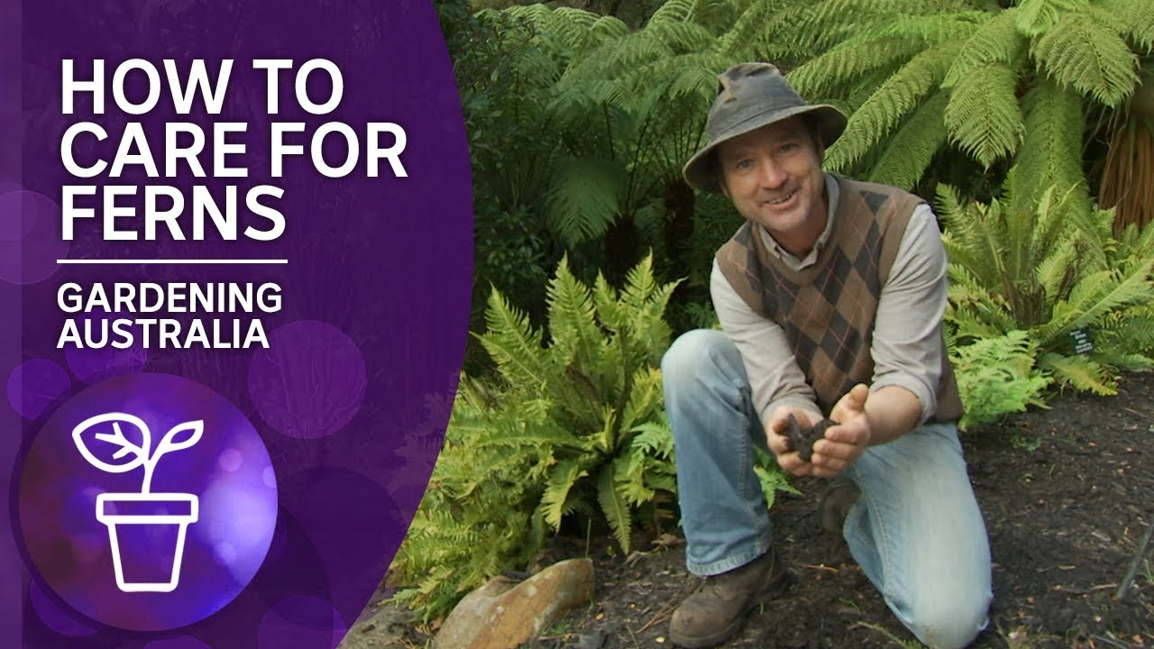 Download How to grow and care for ferns