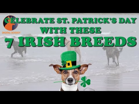 7 Irish Dog Breeds for Saint Patrick's Day