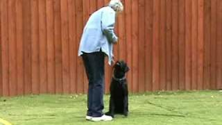 Canis Fidelis Dog Training Solutions