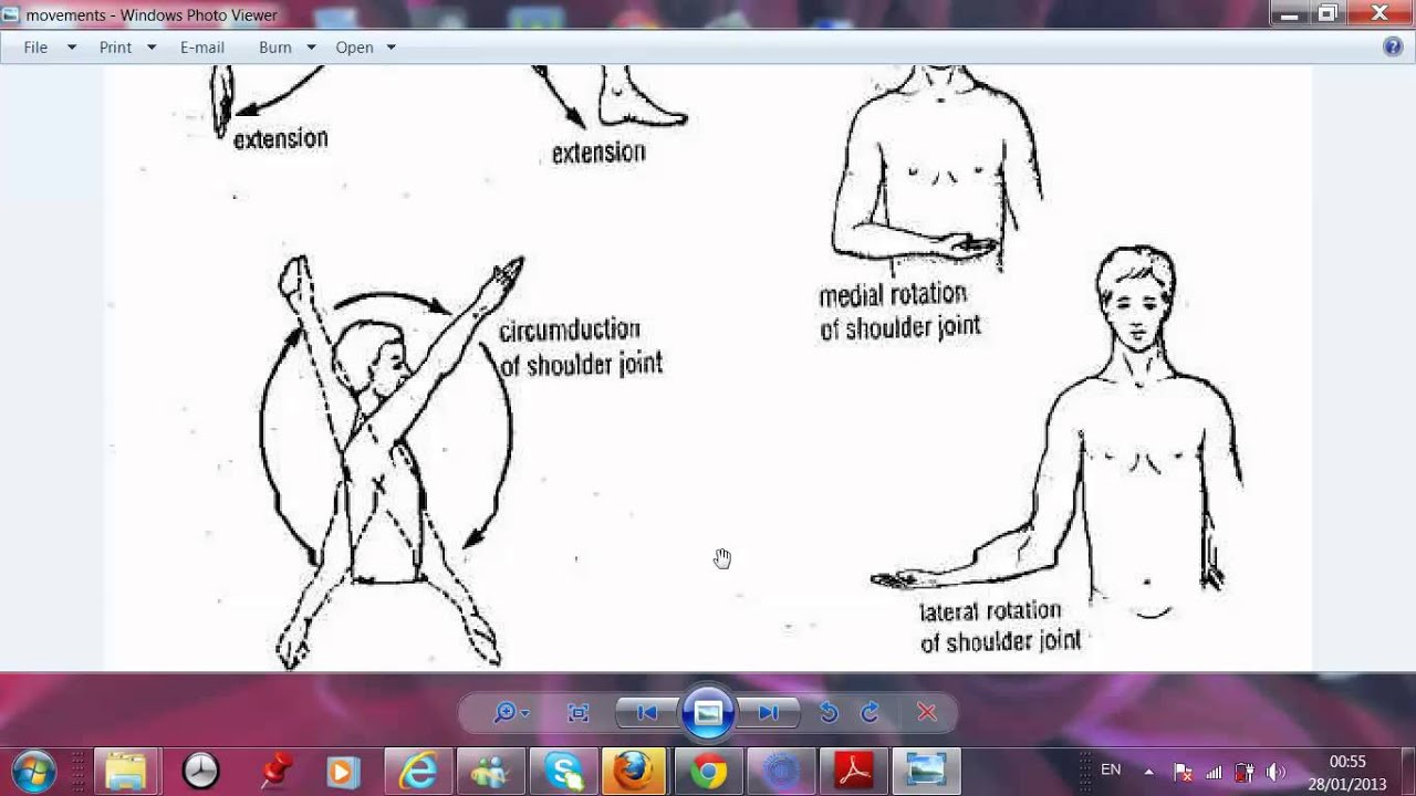 lecture 1 introduction to anatomy - YouTube