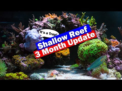Shallow Reef Tank Update - 3 Months In And An Anemone Removal Trap!