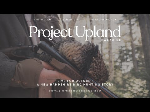 Ruffed Grouse And Woodcock Hunting In New Hampshire - Live For October