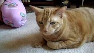 Fluticasone Inhaler For Cat S