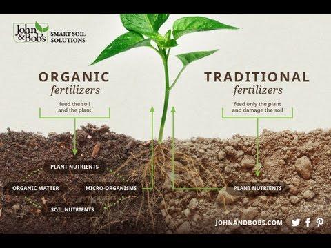 21st Century Garden Healthy Soil Nutritious Food