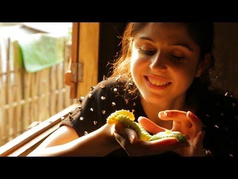 Silkworm Farming || Umden Village || Shillong