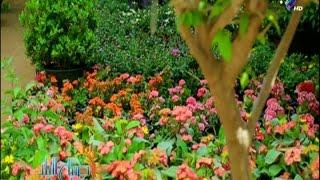 فى عيد الربيع تعرف تاريخ حديقة الأورمان..