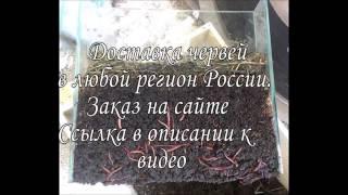 биогумус производство видео