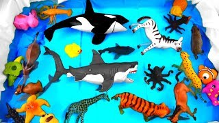Learn Colors With Animals for Kids - Colours With Animals Show for Children