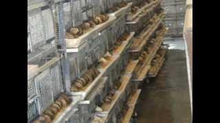 quail farm fadelindia 8923471099, 05921222211