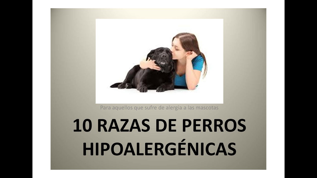 10 razas de perros para al rgicos youtube for Vallas para perros en casa