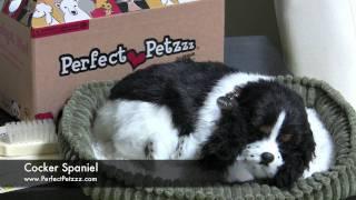 Perfect Petzzz : Cocker Spaniel