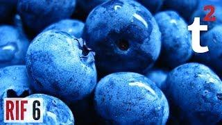 Blueberries Are a Lie!!? RIF 6 thumbnail