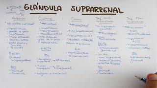 Glándula suprarrenal: Addison, Cushing, Conn, Sx.suprarrenogenital, Def. 21a y 17b hidroxilasa