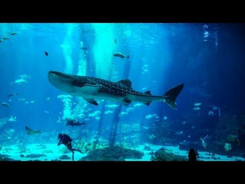 Georgia Aquarium Atlanta GA - Music: ATLANTIS by ROSS QUARESMINI