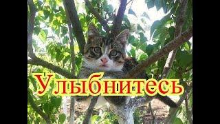 Позитив. Смешные коты. Создай себе хорошее настроение