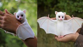 7 najbardziej słodkich egzotycznych zwierząt, jakie możesz trzymać w domu!