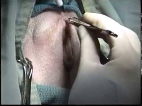 Голые письки, вагины, пизд крупно 88 фото секс фото голых
