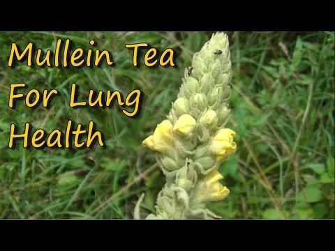 easy-to-make-&-healthy-mullein-tea