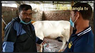 তুহিন ভাইয়ের চ্যালেঞ্জ| কুরবানির ষাঁড় ৩০০ ও খাসি ৩৭৫ টাকায়| সিঙ্গাপুর প্রাবাসীর গরু কেনা| দিনাজপুর|