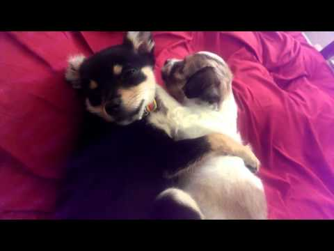 Cute Puppies Hugging Each Other