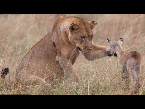 Amazing!! Animal Saves Another Animal | Animal Heroes (HD)