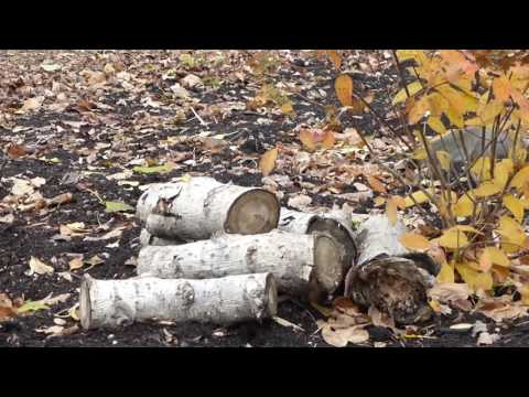 Autumn in St. Vital Park