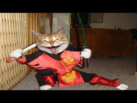 Ninja Cats - Ninja Cats Compilation Part 2 - Funny Cats
