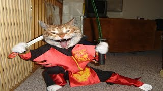 Ninja Cats - Ninja Cats Compilation Part 2 - Funny Cats