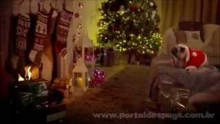 "Qvc Uk - ""christmas Gift Weekend "" -  Comercial De Tv - Propaganda Com Pug"