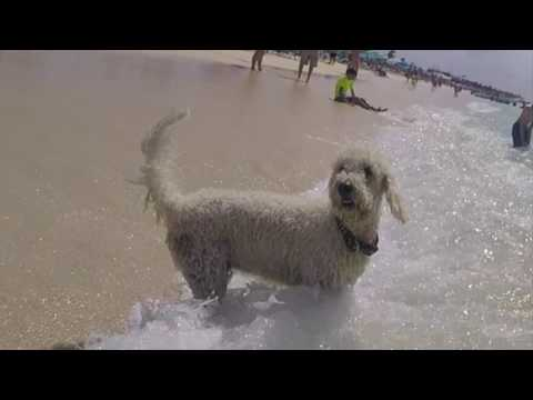 Grand Turk Island Beach Dog Fishing in the Surf