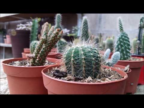 Conceptos básicos del cultivo de los cactus