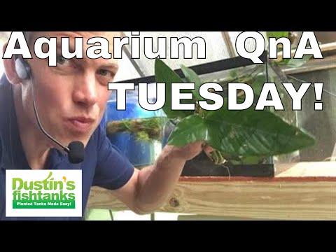 Aquarium Q and A Tuesday- Anubias and  aquarium plumbing