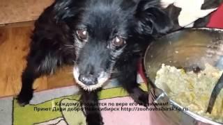 В то что собака выживет не верил никто | Спасение собаки и жестокость хозяев