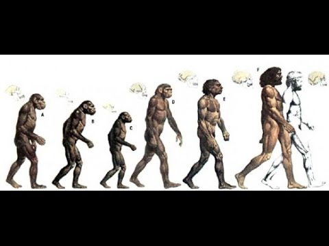 Human Evolution: The Origin of Humans - Documentary Films ...