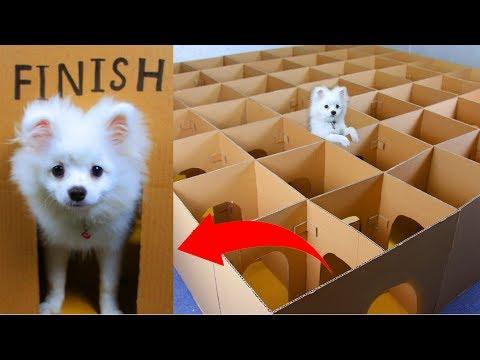 Snowball Dog Hugo Hamster And Corn Kittens Running In Castle Maze