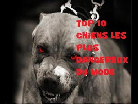 TOP 10 chiens les plus dangereux du monde - YouTube