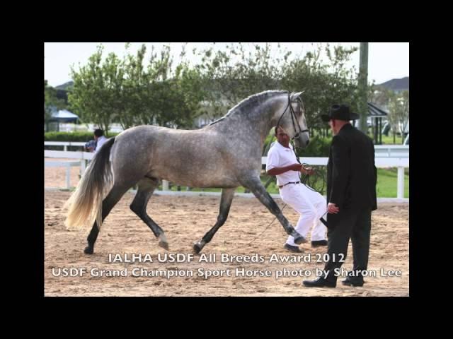 Spanish Norman 3 quarter colt