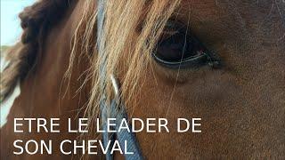 6 astuces pour être le leader de son cheval ✩