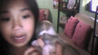 My Little Shih Tzu Half Mini Pincher  (so Cute!...)