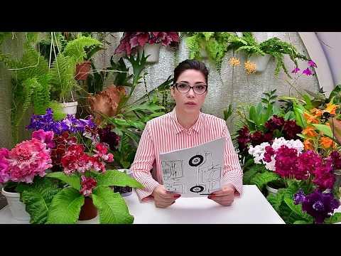Как научиться поливать комнатные растения