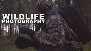 Wildlife Photography - Not always what it seems thumbnail