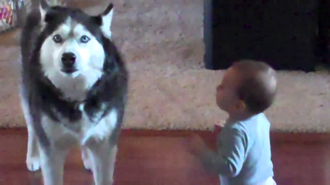 Dog imitates baby - YouTube