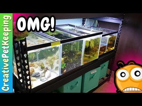 All of my Baby Fish - SUPRISE SECRET SPAWN - Fish Fan Friday LIVE