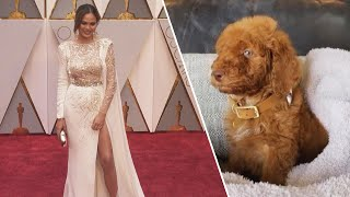 Why it Seems Celebs Get Special Treatment Adopting Dogs