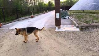 Ultrasonic Sonic Dog Cat Bird Rodent Animal Repeller Pest Control