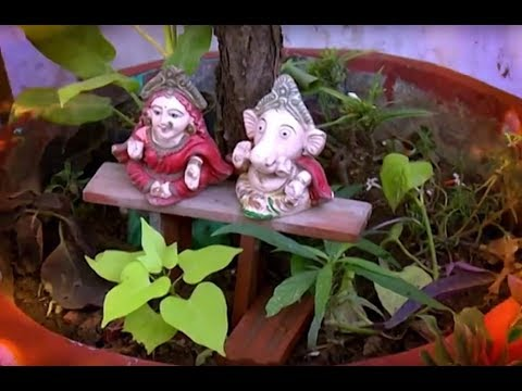 छत्त पर बाग़वानी - Creative use of waste left-over after Diwali for gardening