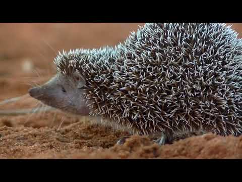 Madagascar's Spiny Forest