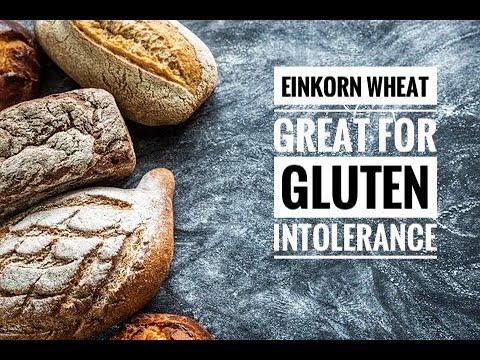 Einkorn Wheat Great for Gluten Intolerance
