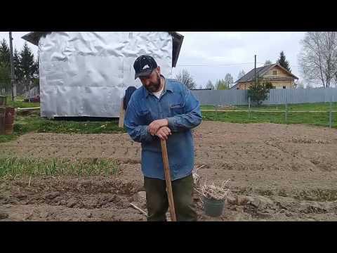 Вопрос: На какую глубину сажать картошку?